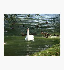Classic Tale Photographic Print