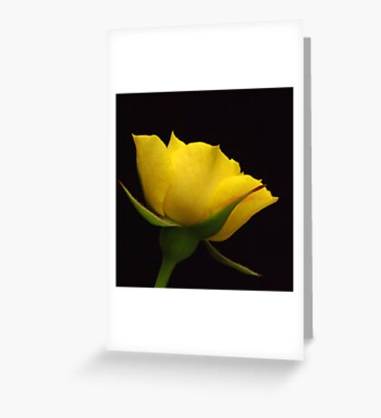 Rose   IX. Greeting Card