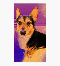 Lovable Corgi Photographic Print