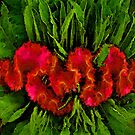 Amaranth splendor by Dulcina