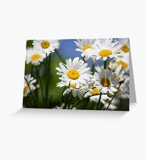 Ox-Eye Daisies Greeting Card