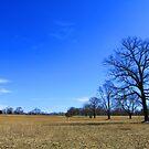 """Waveny Big Blue Sky by Christine """"Xine"""" Segalas"""