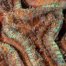 Reef Art - Lobophyllia by Henry Jager