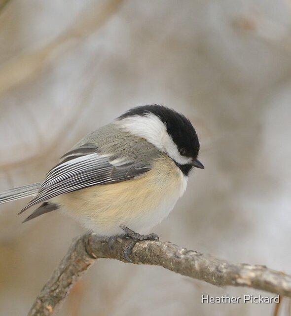 Puff Chickadee by Heather Pickard
