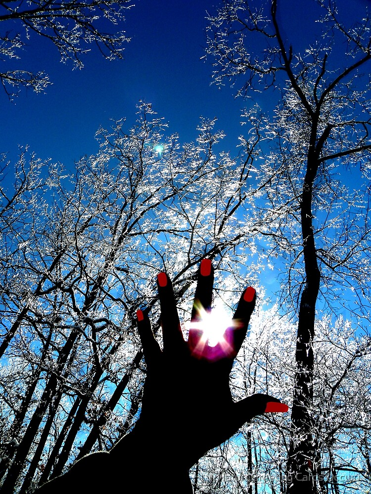 Stop Winter, Catch The Spring Sun by NatureGreeting Cards ©ccwri