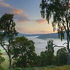 Scotch Mist by Jamie  Green