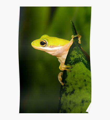 """Hang Sixteen"" - an american green tree frog Poster"