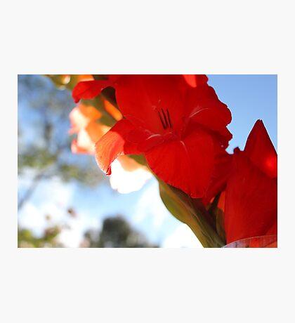 Red Gladiolas Photographic Print