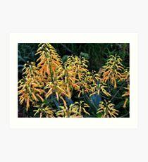 Cactus Flower:  Thorned Beauty Art Print