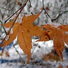 Wintery Leaves by Lorrie Davis