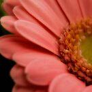 In the pink   (Geum macro) by Karen  Betts