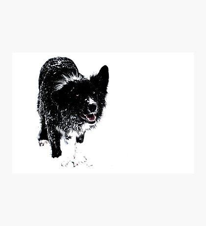 Black on White Photographic Print