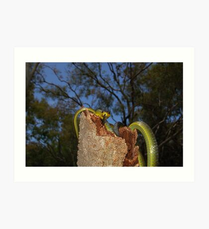 Green Tree Snake 2 Art Print