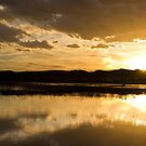 Sunset at the Bosque by Mitchell Tillison