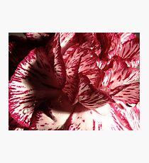 Carnation Macro Photographic Print