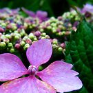 small pink and purple flowers by SophieSimone