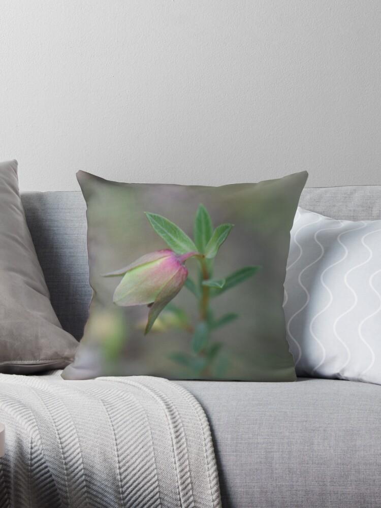 Riceflower by Caroline Everett