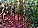 Through the Pine Tree Forest by Marcia Rubin