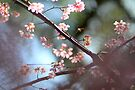 cherry tree by Marianna Tankelevich