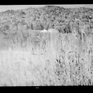 medium format black and white film photograph by david roth