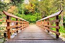 Edwards Bridge 3 by John Velocci