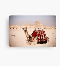 Tourist attraction - Camel at Giza pyramids, Cairo Canvas Print