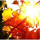 Warm light by fenist