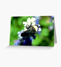Wings folded Greeting Card