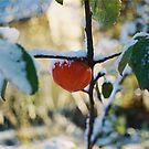 The last apple in my garden 2010 by prema