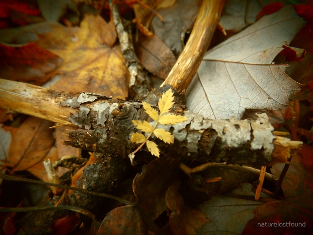 Yellow leaf. by naturelostfound
