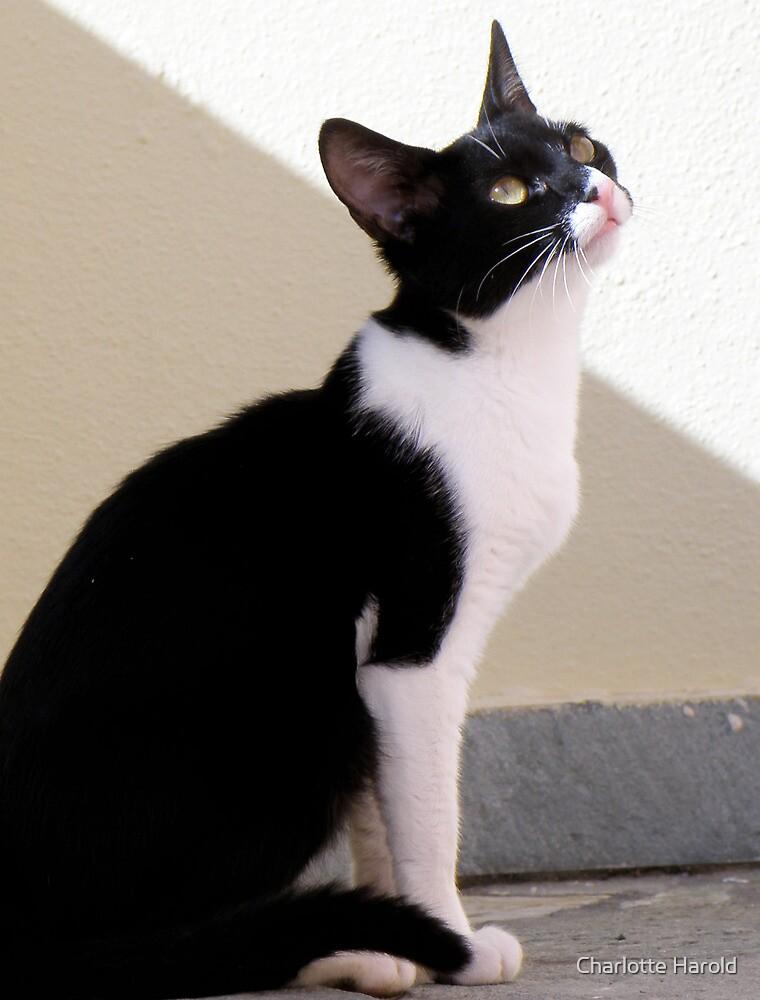 Crete Cat by Charlotte Harold