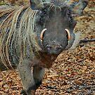Boar Warthog by AnnDixon