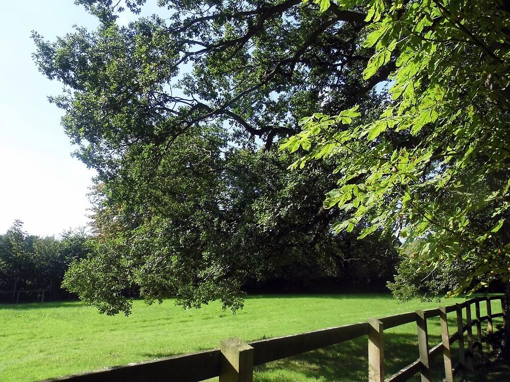 my favorite oak tree by margaret hanks