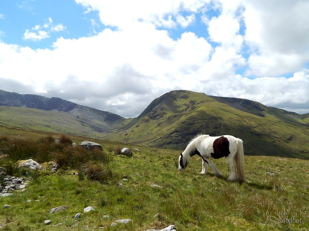 Grazing On Snowdon by wallcat