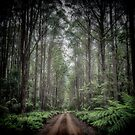 Misty Road, Monga NP [colour] by Geoffrey Dunn