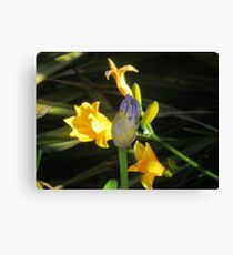 magical macro Canvas Print