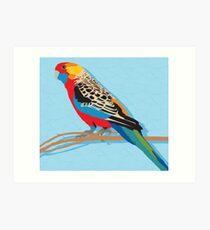 Rosella Bird Art Print