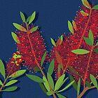 Red Bottlebrush Flowers by blueidesign