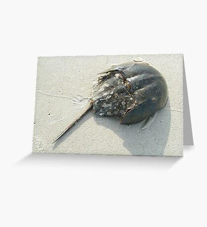 Horseshoe Crab (Limulus polyphemus) Greeting Card