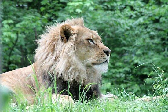 Lion by Arianna  Stewart