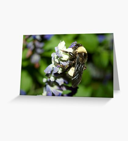 A bumblebee favorite Greeting Card