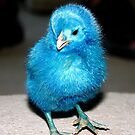 Blue Chick by Don Rankin