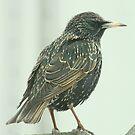 Bird Portrait by RockyWalley