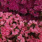 A Garden in the Hills Set 2- 31 by beeden