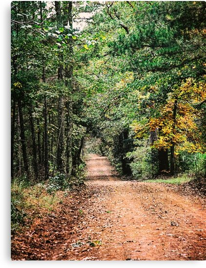 Forest Park Road in East Texas by Capt. Charles McKelroy