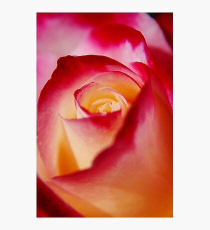 Eternal Rose Photographic Print