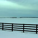Winter All Fenced In.... and Settling in for the Long Hall.... by Larry Llewellyn