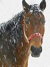 Nayyyyyyhbors Horse in the snow by NatureGreeting Cards ©ccwri