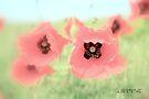 Poppies 1 by aMOONy