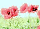 Poppies 2 by aMOONy